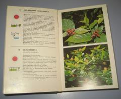 SVE U CVEĆU priručnik o vrstama i gajenju biljaka