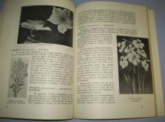 CVEĆARSTVO vrste gajenje i upotreba cveća