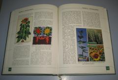 Sunflower Genetics and Breeding international monography