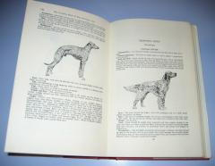 The complete book of DOG AND PUPPY CARE